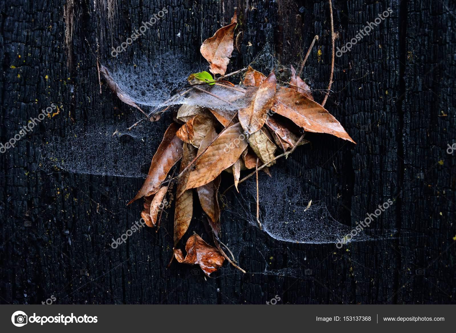 Toile D Araign E Spider Avec Tomber Des Feuilles Brunes Sur Bois  # Banc En Bois Brule