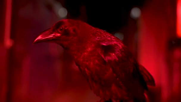 Raven with red lighting against a black, dark corridor