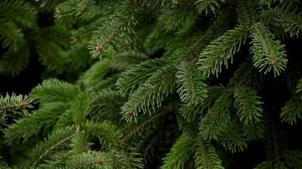Evergreen Christmas tree full frame