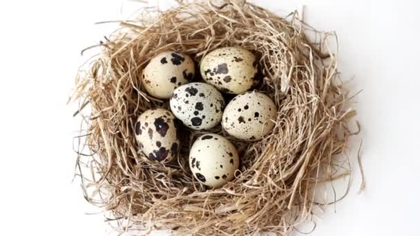 Quail eggs in nest from straw for Easter