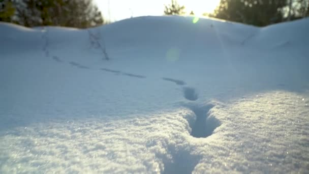 Dolly out. Someones footprints in the snow. Movement in a snowy meadow.