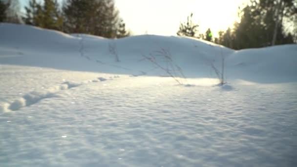 Něčí stopy ve sněhu. Pohyb na zasněžené louce. Nadýchané volné čisté sněhové jiskry na slunci.