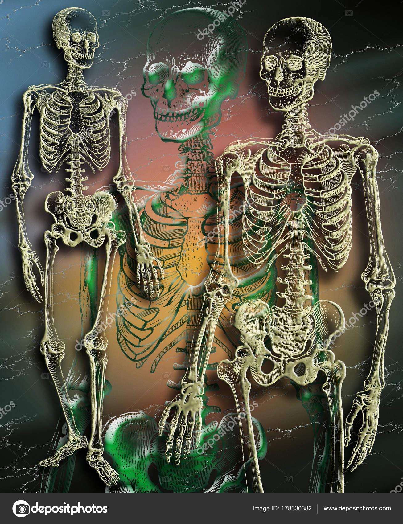 das menschliche Skelett — Stockfoto © Steve_Allen #178330382