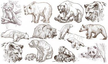 Animals around the World. Bears. An hand drawn full sized pack.