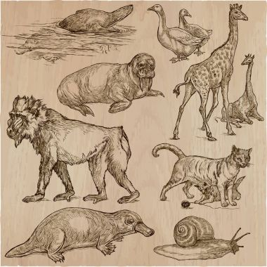 Animals - An hand drawn vector pack, line art