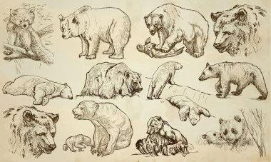 BEARS - An hand drawn vector pack, line art