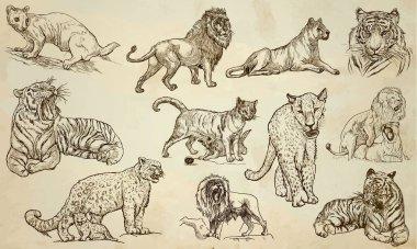 CATS - An hand drawn vector pack, line art