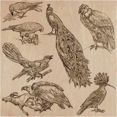 BIRDS - An hand drawn vector pack, line art