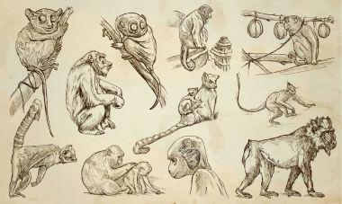 MONKEYS - An hand drawn vector pack, line art