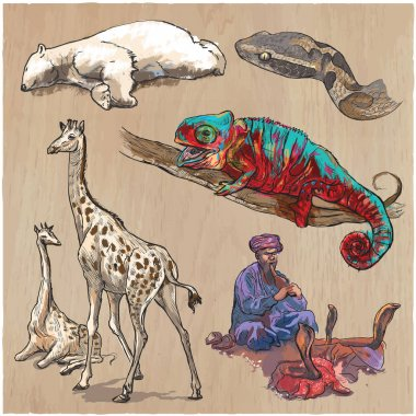 An hand drawn vector collection, pack of animals. Colored line a
