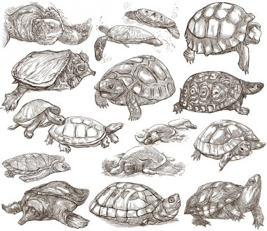 Turtles - collection of hand drawings, freehand sketches on whit