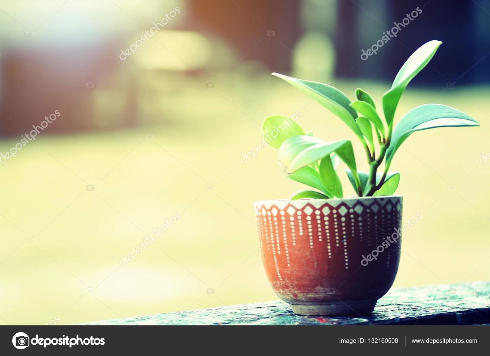Bloempot Met Licht : Keramiek bloempot met plant op houten plank met licht flare