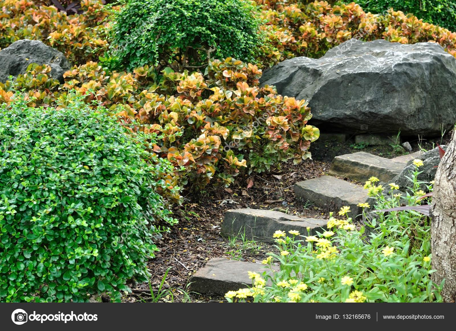 eine steintreppe im garten mit schönen pflanzen — stockfoto
