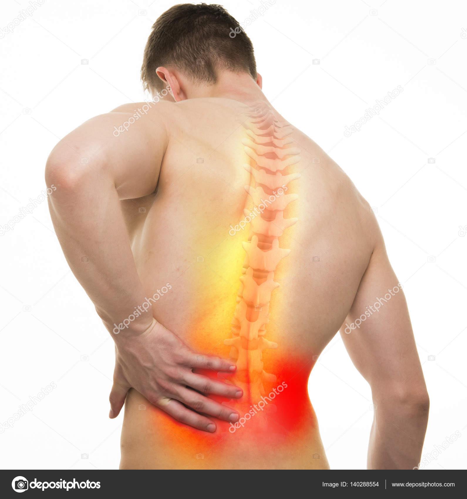 Anatomía masculina de espalda lesión - estudio con isol ilustración ...