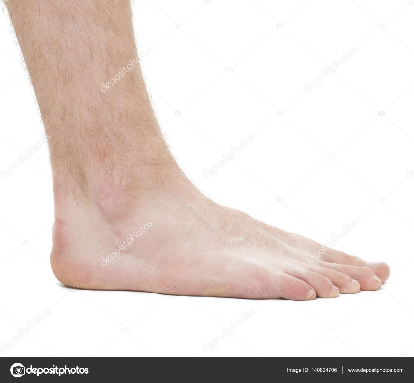 Fuß - Anatomie-männlich - Studio Foto isoliert auf weiss — Stockfoto ...