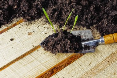 A seedling before planting, using a garden scoop