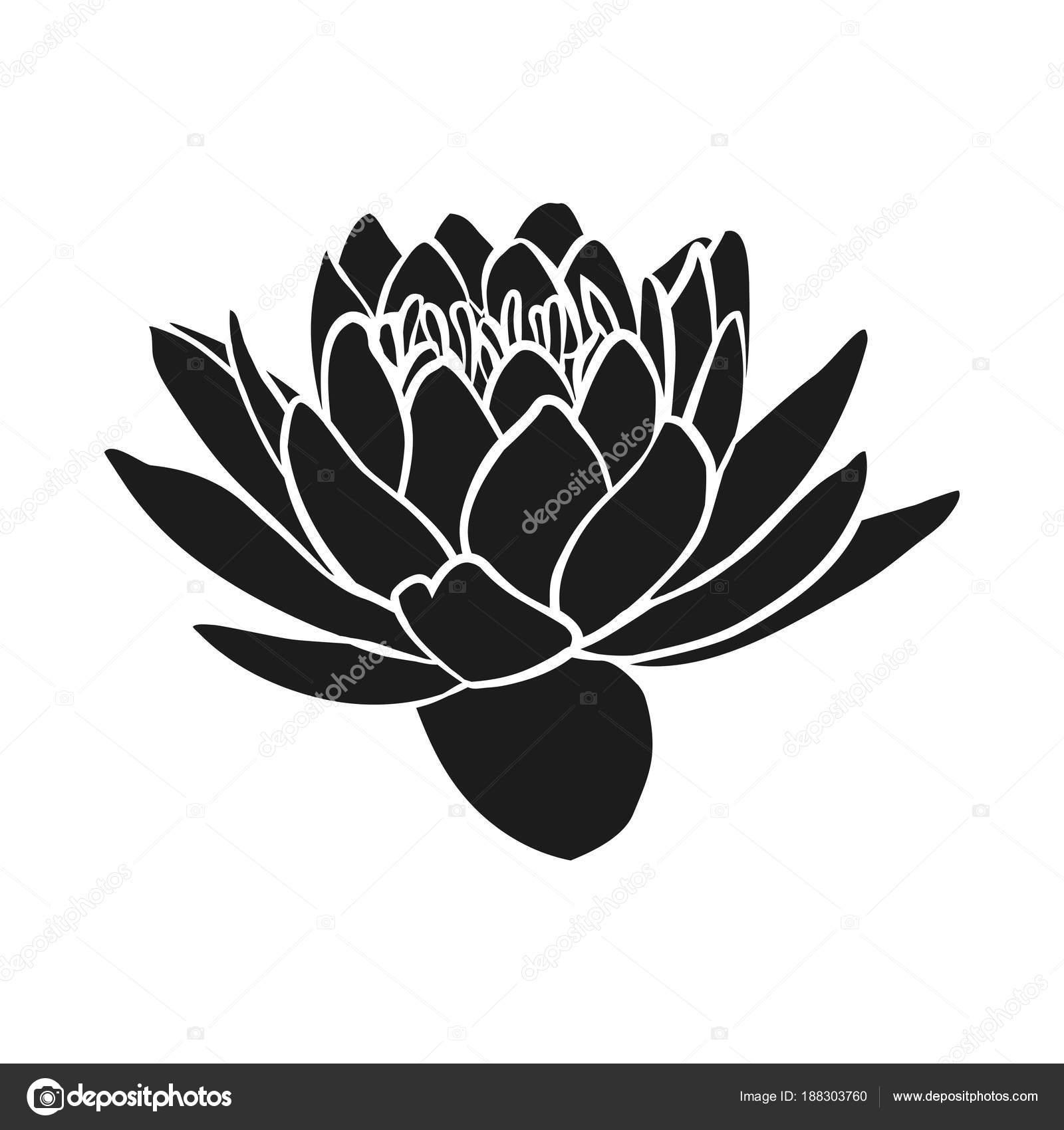 Lotus Flowers Icon Stock Vector Likka 188303760