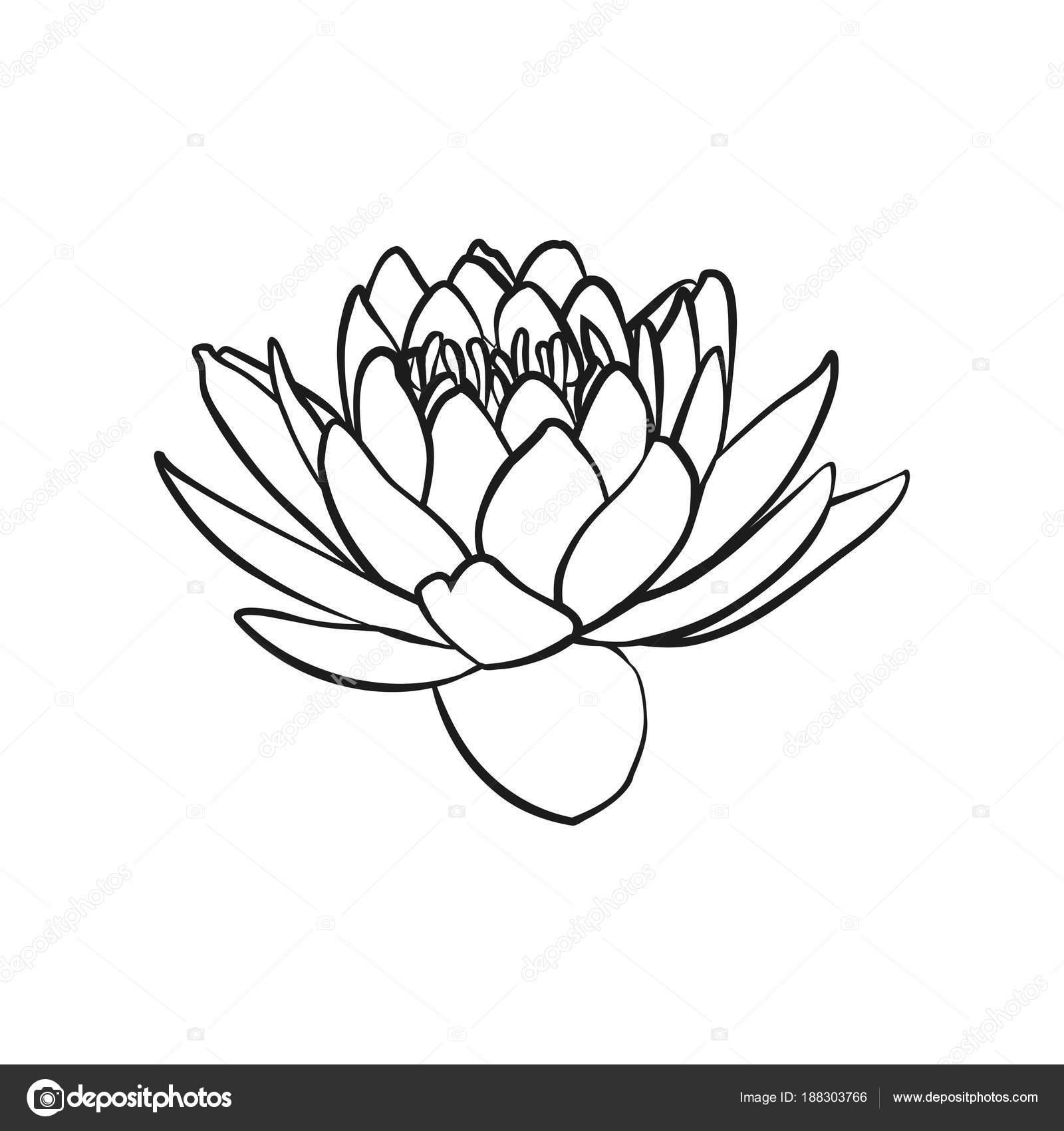 Lotus Flowers Icon Stock Vector Likka 188303766
