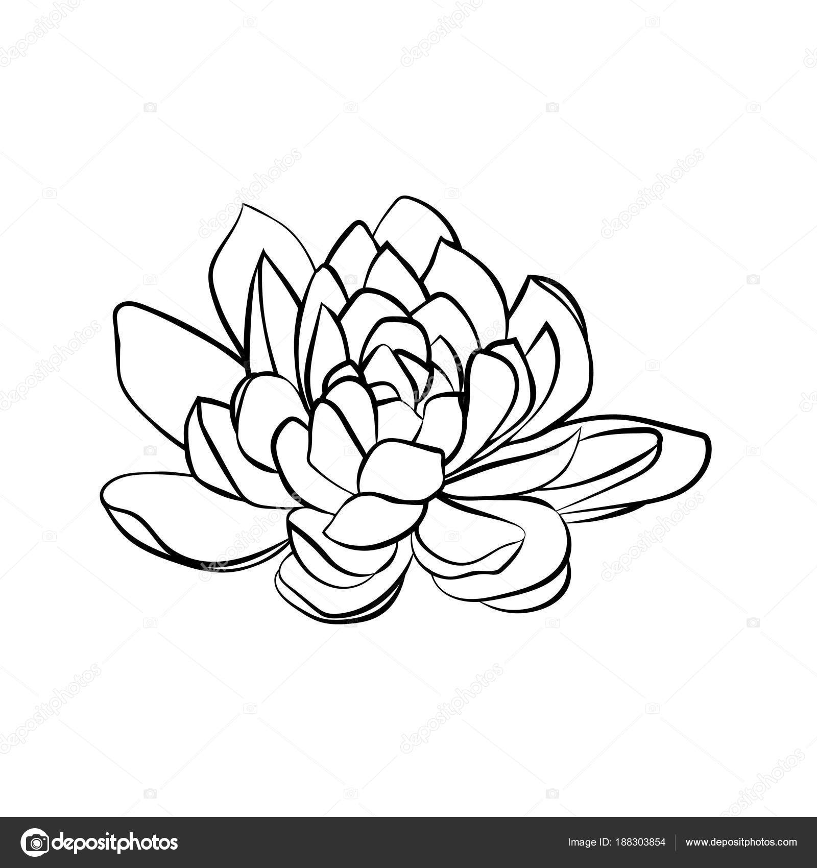 Lotus Flowers Icon Stock Vector Likka 188303854