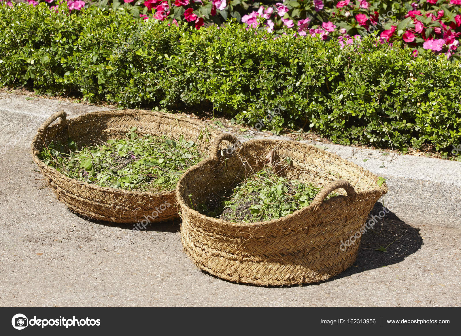 Rieten mand. tuin struik snoeien. tuinieren tijd u2014 stockfoto