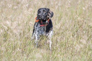 Training hunting dogs