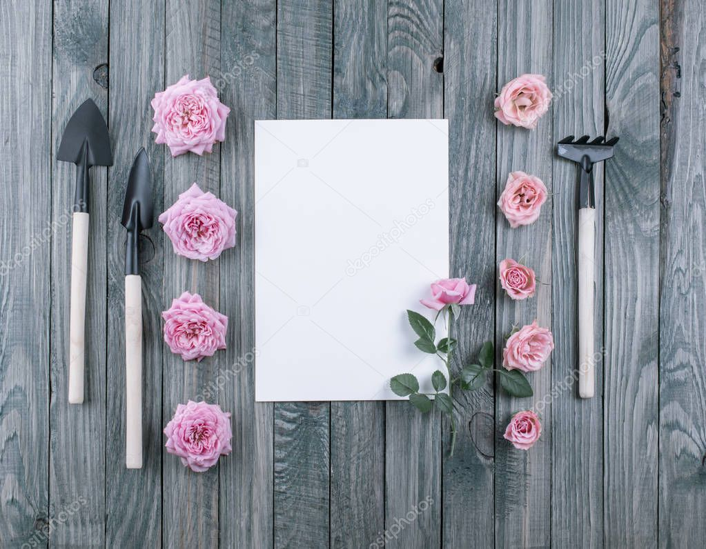 Gardening concept with tools and roses