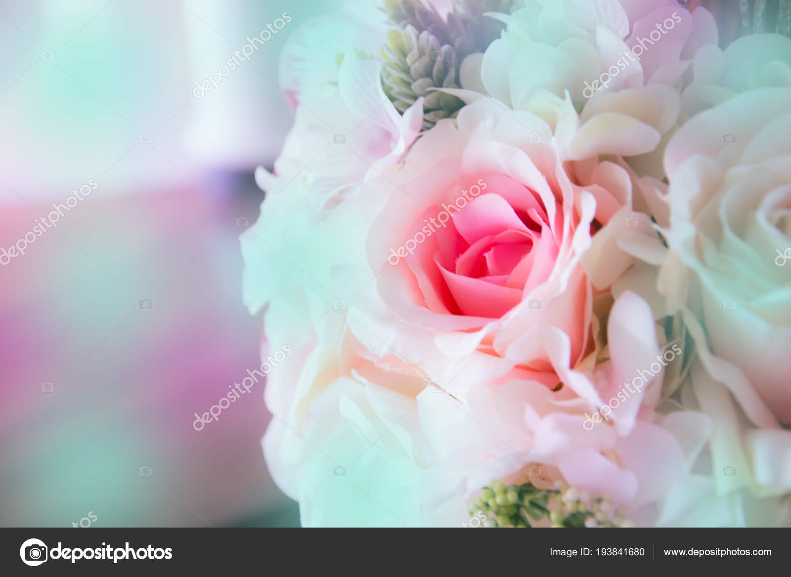 Rosa Rosen Schöne Blumen Stockfoto Tlovely 193841680