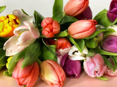 tulip colorful spring flowers  festive bouquet floral  valentines day or women day  on pink background best wishes love quotes copy space template