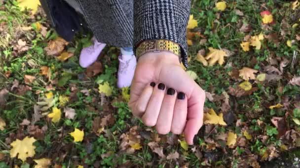 Kaštany v ruce. podzimní les