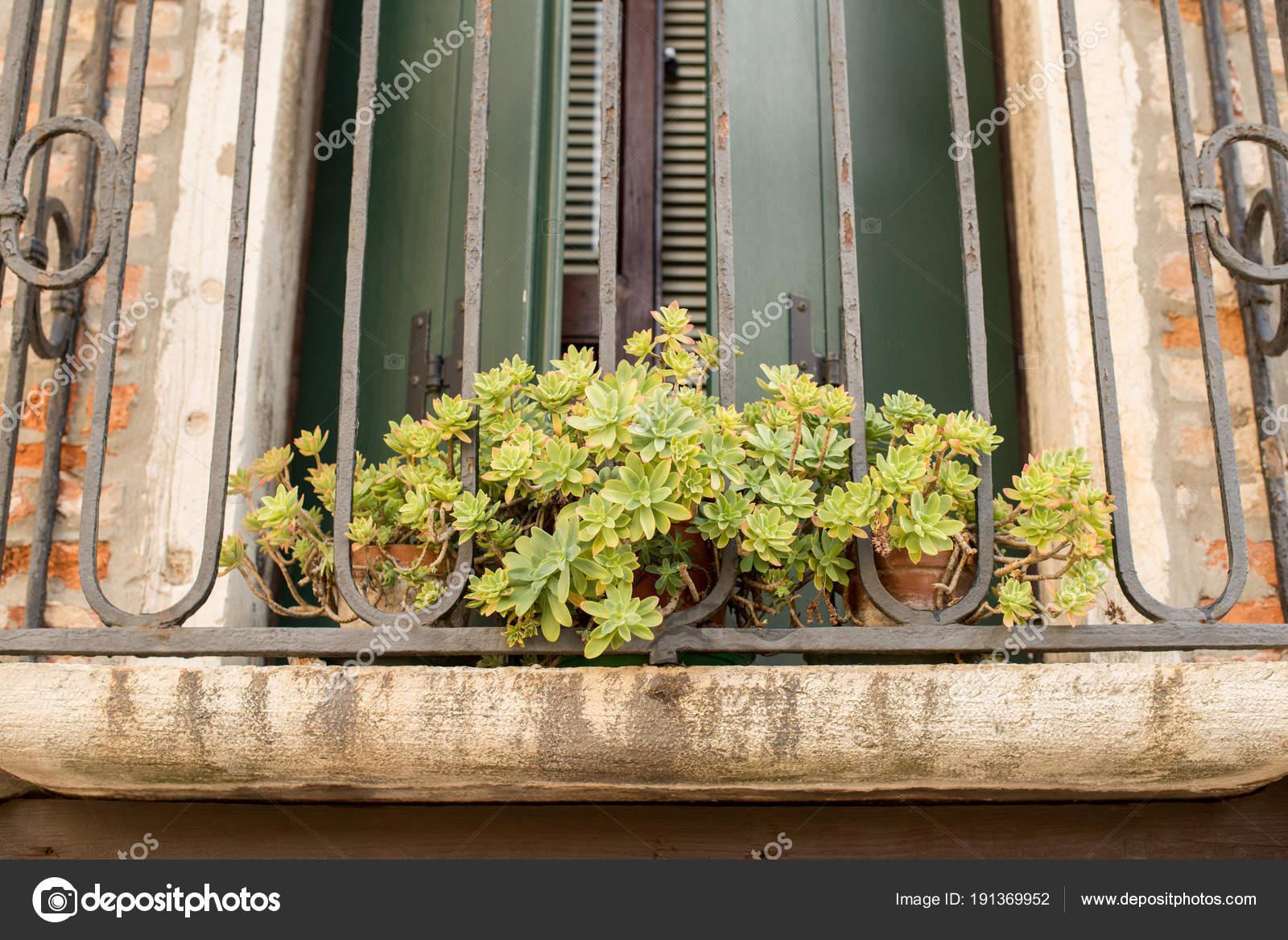 grüne pflanze in roten blumentopf draußen auf der fensterbank gegen