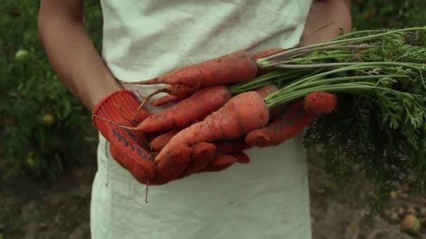 Mladá farmářka drží v rukou mrkvovou úrodu. Farmářka v bílé zástěře si vezme do rukou mrkev. Farmářská dívka stojí ve své zahradě a ukazuje mrkev úrodu.