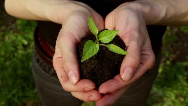 Mladá dívka drží hrst půdy s rostoucí sazenicí. Mladý zelený výhonek v rukou farmářky. Koncept zelené planety, ekologie. Symbol růstu, ochrana životního prostředí.