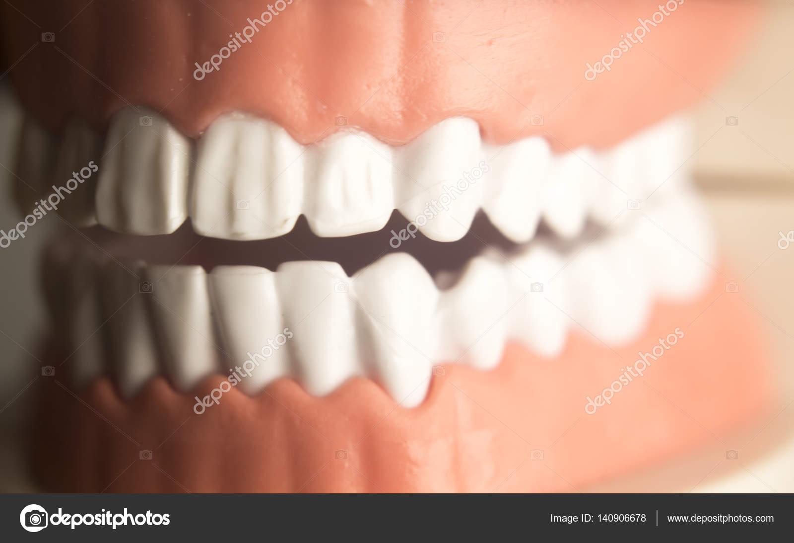 Modelo de dientes dentales odontología — Fotos de Stock ...