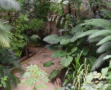 Large deciduous plants in a greenhouse in the Botanical Garden of Moscow University