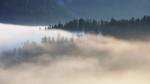Mlha a mlha v horských lesů krajina čas laspe