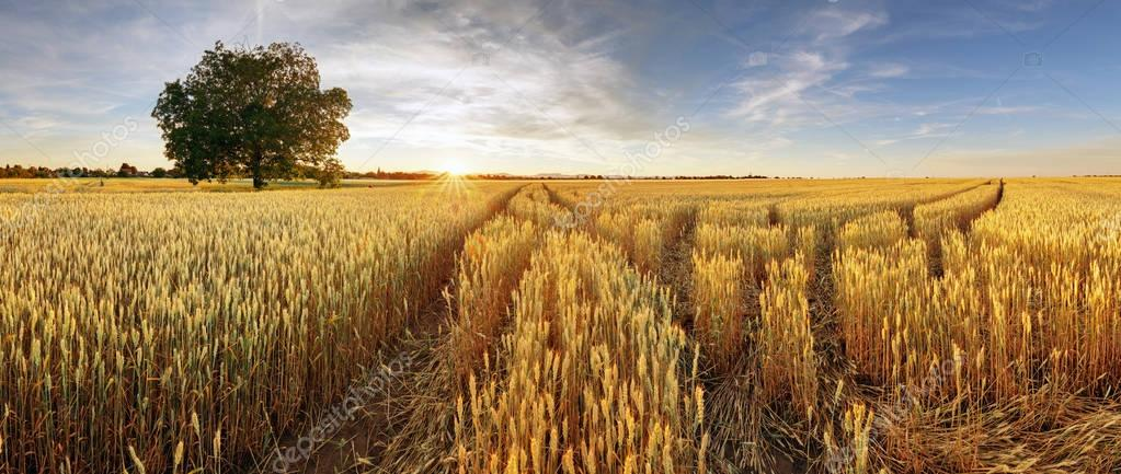 Фотообои Rural landscape with wheat field on sunset