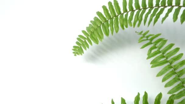 Zelená kymácející kapradí listy jemným větrem vánek na jaře léto na bílé prázdné dřevěné zdi prázdný stůl pozadí