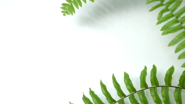 Green swaying fern leaves by gentle wind breeze in spring summer on white blank wooden wall empty table background