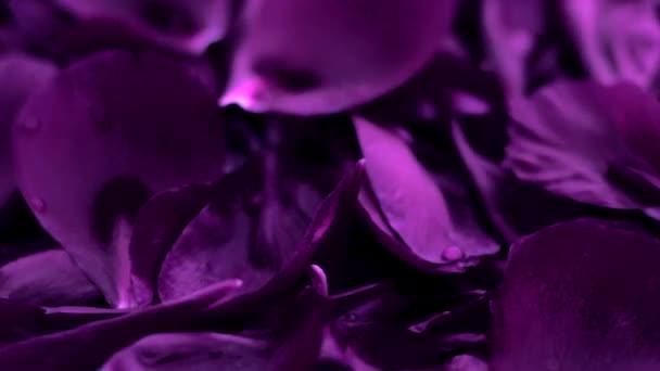 Abstraktní fialové květinové pozadí, okvětní lístky ve vodě