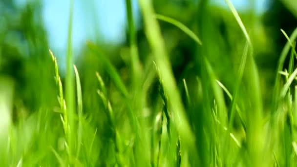 Zöld fű rét, kék ég és napfény nyáron, természet háttér