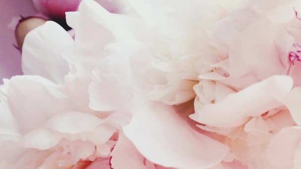 Wonderful white and pink peony flowers as background, wedding and floral decor