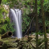 Curtis Falls ve městě Mount Tamborine
