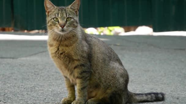 Graue süße Katze sitzt am Fenster und miaut.