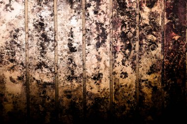Black spots of toxic mold and fungus bacteria on a wall.