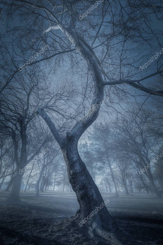 old trees in a forest with fog
