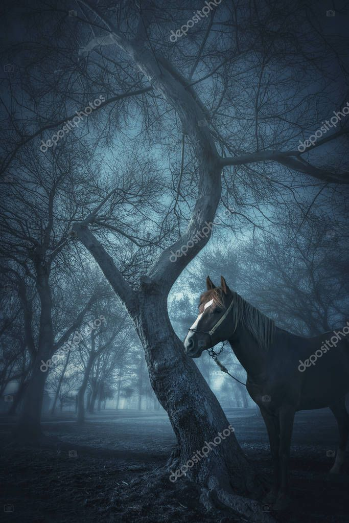 old trees in a forest with fog and horse