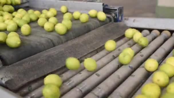 citrony na dopravní pásy v továrně. Ovocný průmysl