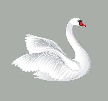 White swan on grey background