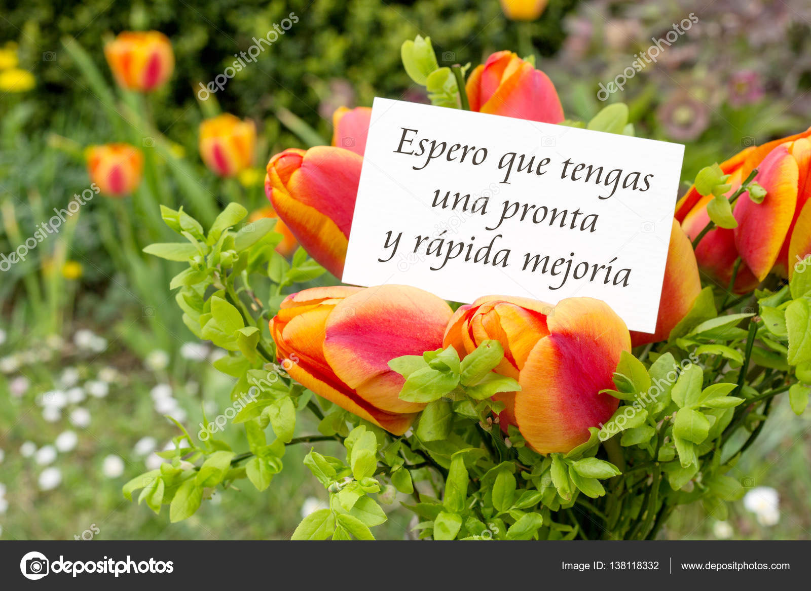 greeting card with tulips and spanish text i hope you make a swift and speedy recovery photo by coramueller