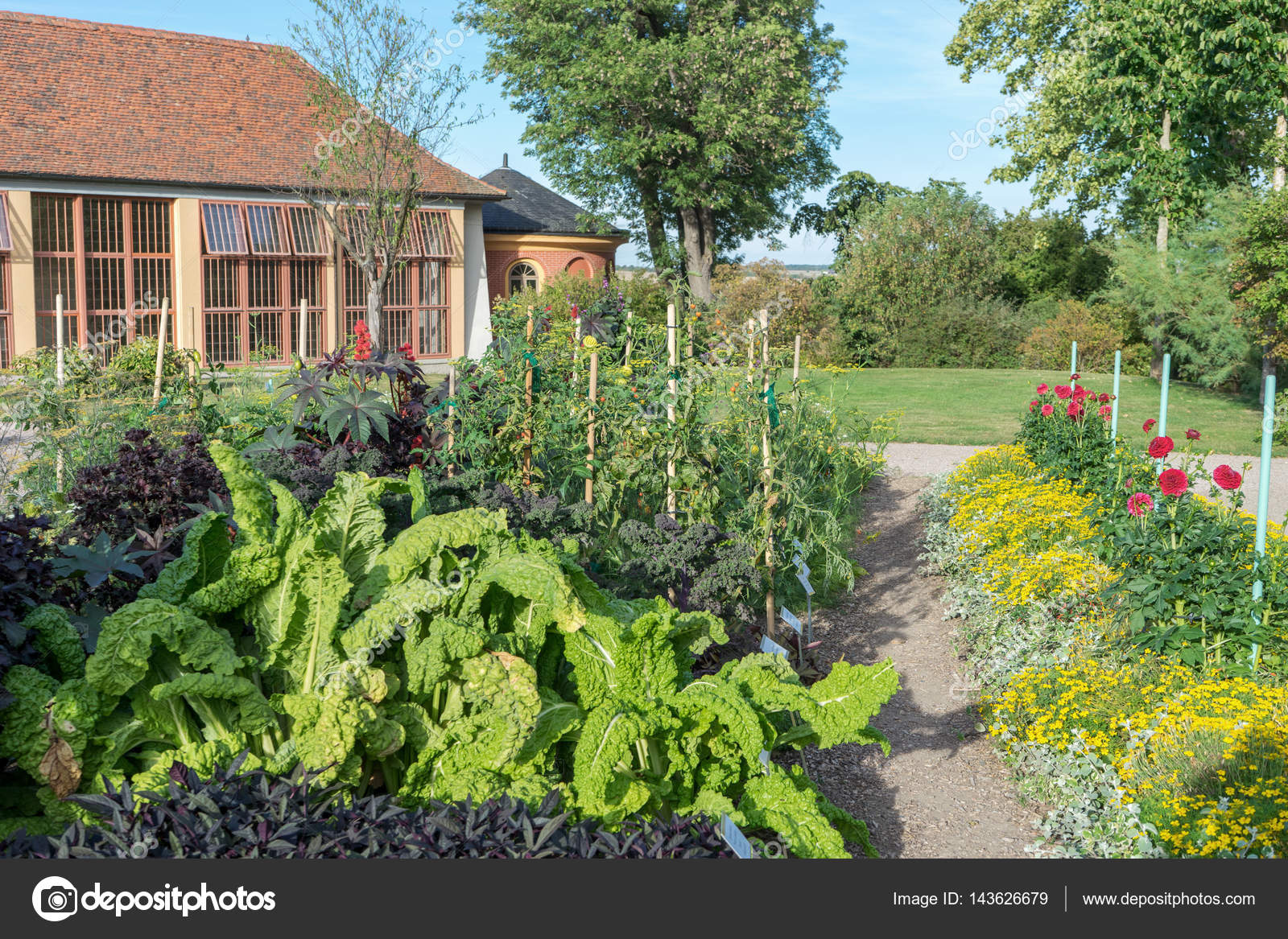 Gemüse Und Zierpflanzen Garten Stockfoto Coramueller 143626679